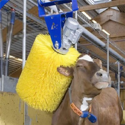 Cattle Brush
