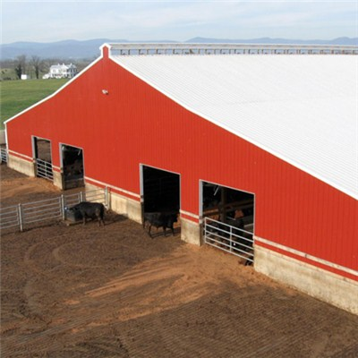 Steel Structure Cowshed