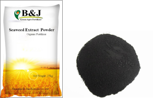 Seasweed Extract Powder
