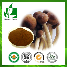 Agrocybe Cylindracea Extract
