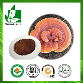 Shell-broken Ganoderma Spore Powder