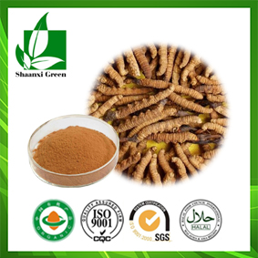 Chinese Caterpillar Fungus Extract