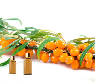 Essential Oils Seabuckthorn Oil