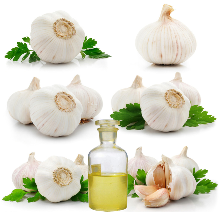 Essential Oils Garlic Oil