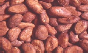 Western Africa Cocoa Bean