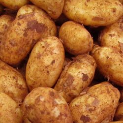 New year fresh potato