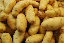 Fresh primium quality potato
