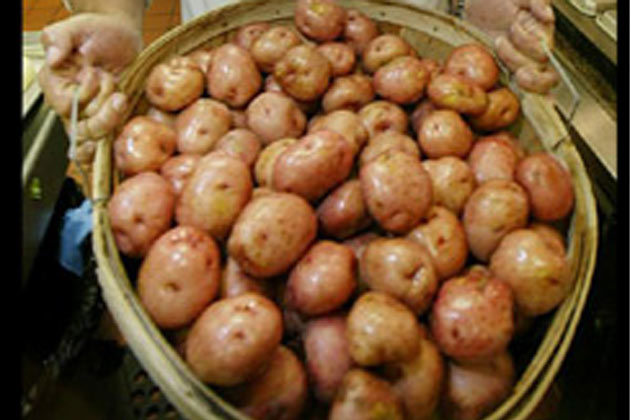 Farm potatoes fresh