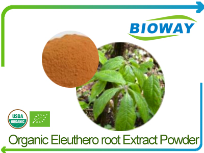 Organic Eleuthero Root Extract Powder