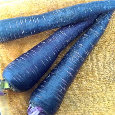 Fresh Black Carrot