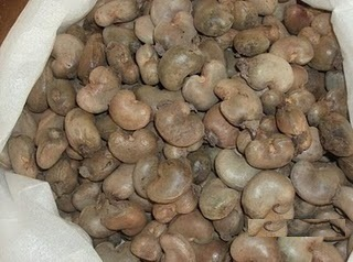 Raw cashew nuts available.
