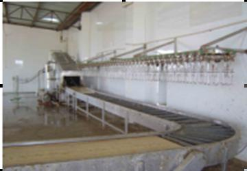 Living Poultry Hanging Manual Conveyor