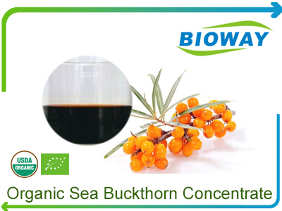 Organic Sea Buckthorn Concentrate