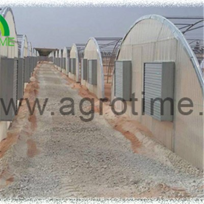 Vegetable Plastic Greenhouse