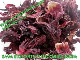 Hibiscus Rosa Sinensis Suppliers