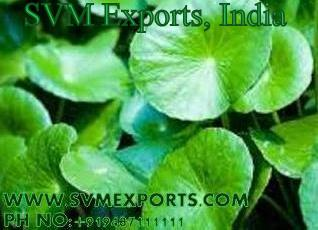 Centella Asiatica Suppliers India