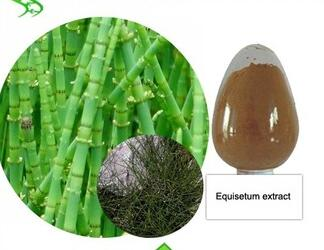 Natural Pure Horsetail Extract