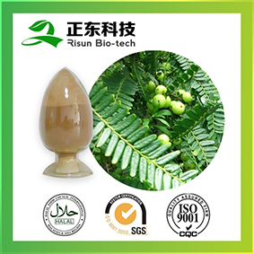 natural plant extract Amla Fruit Extract powder