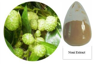 Natural Noni Extract Powder