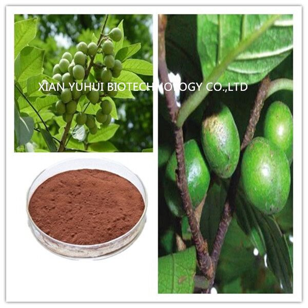 pygeum africanum bark extract powder,pygeum africanum bark extract,pygeum bark p.e.