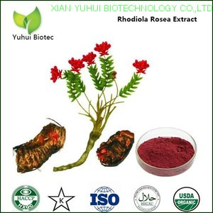 rhodiola rosea powder extract,natural rhodiola rosea powder extract,rhodiola rosea extract