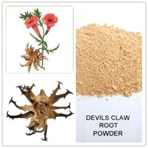 devil's claw powder,devil's claw root extract,high quality devil's claw extract