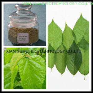 Mulberry leaf flavonoids,Mulberry leaf extract flavonoids,Mulberry leaf flavonoids 5%