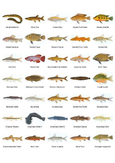 Fresh Fishes. Different species and sizes available
