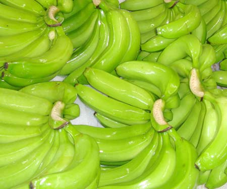 Green mature sweet cavendish bananas