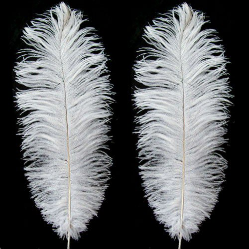 Natural ostrich feathers and died ostrich feathers and other feathers