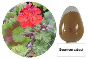 Geranium Extract Powder 10:1