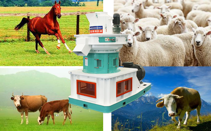 Jingerui customized sheep feed particle machine china for sale