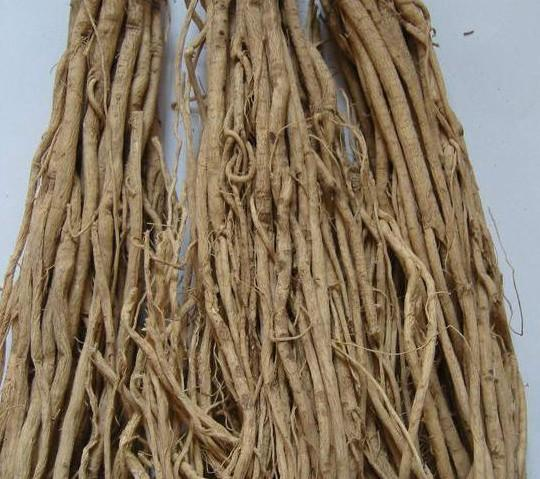 Chinese herb astragalus root extract