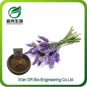 Lavender Extract,Hot Selling 100% Natural Organic Lavender Extract,Pure Lavender Extract Powder