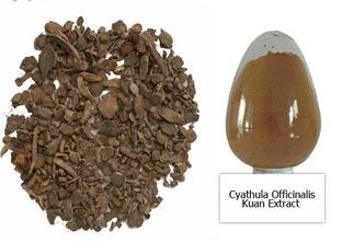 Cyathula Officinalis Kuan Extract Powder