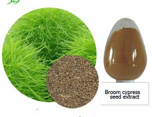 Natural Broom cypress seed extract powder