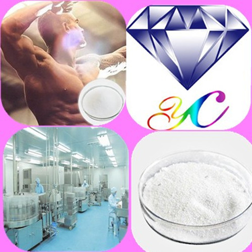 High Quality Steroid Hormone Powder Testosterone Enanthate for Bodybuilding