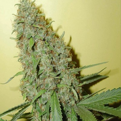 Buy top quality medical marijuana and cannabis oil for cancer cure