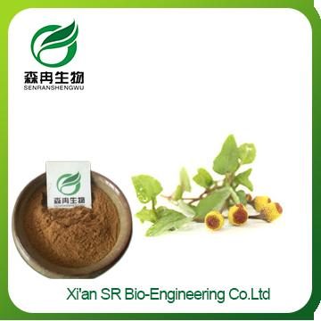 Acmella oleracea Extract,Factory Supply Organic Spilanthes Acmella Extract,High Quality Spilanthes Acmella Extract