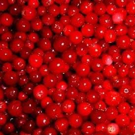 Lingonberry Powder