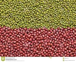 GREEN MUNG BEANS FOR SPROUTING
