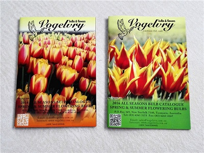 Advertising brochure printing online folded flyer printing company in china