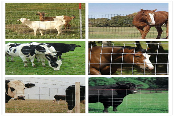 Agriculture Field Farm Live Stock Fence