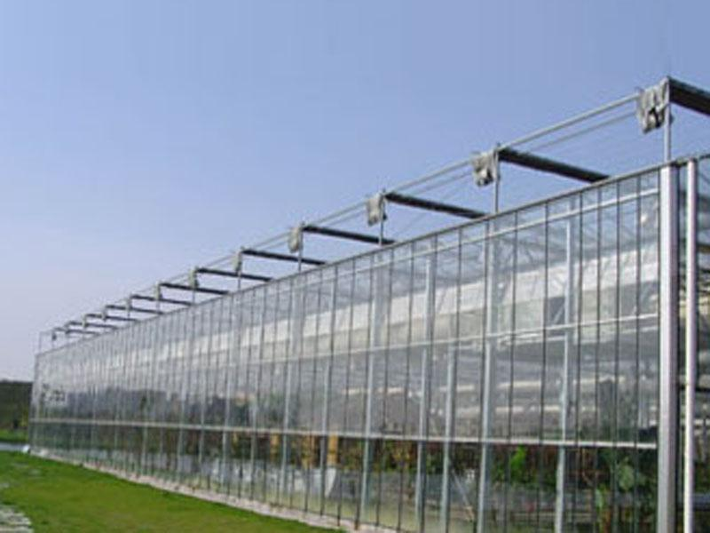 Glass Multi-Span Greenhouse
