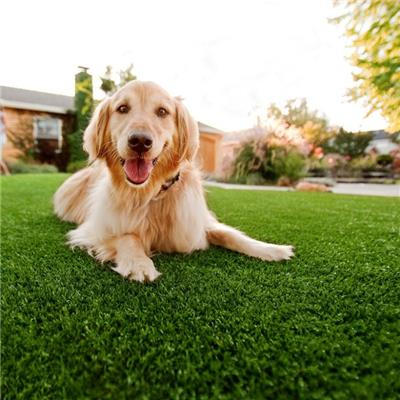 Pet Artificial Grass For Dogs