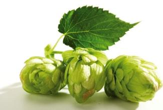 Beer Hops Extract