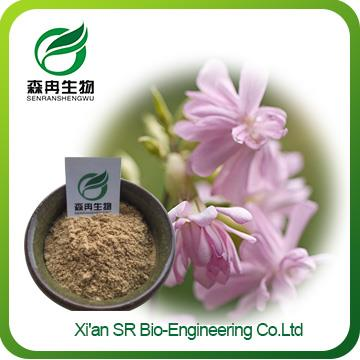 Saponaria Extract,Factory Supply High Quality Saponin Powder,Wholesale Quillaja Saponaria Powder