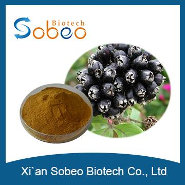 Siberian Ginseng Extract ,High Quality Siberian Ginseng Root Extract /Siberian Ginseng Dry Extract Manufacturer