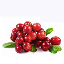 Cranberry Extract, High Quality 100% Pure Natural Green Healthy Cranberry Extract, Best Price