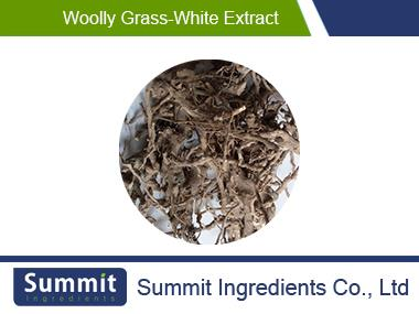 Woolly grass-white extract 10:1,cortex lycii radicis,root-bark of Chinese wolfberry,Lycium chinensis